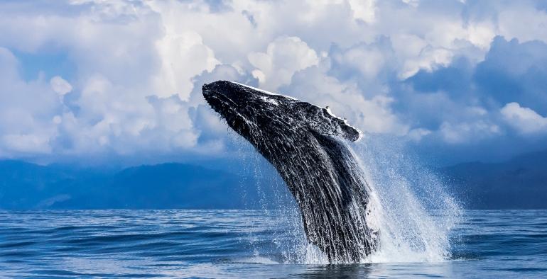 12 Tage Costa Rica Unterwasser, Landschaft & Tierwelt Fotografie Abenteuer