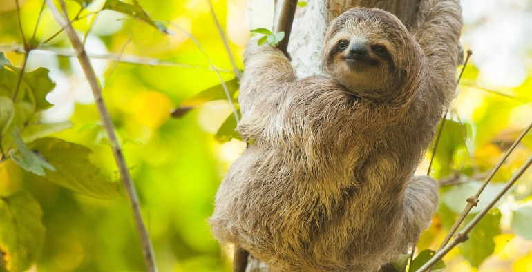 Sloths, Monkeys & Waterfall Tour