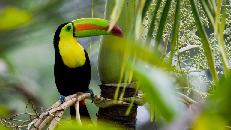 7 Nights Dive Costa Rica – Natural Attractions
